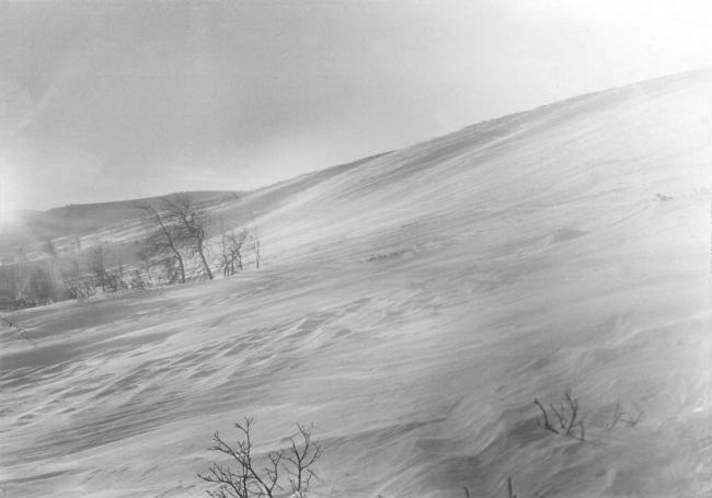 Dyatlov Pass: Search 1959