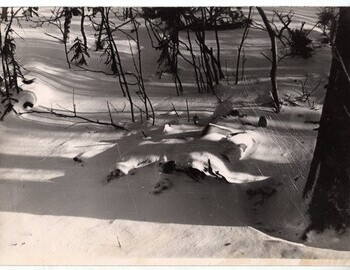 The bodies of Doroshenko and Krivonischenko. Photo by E. Serdityh from Feb 27. Karelin archive.