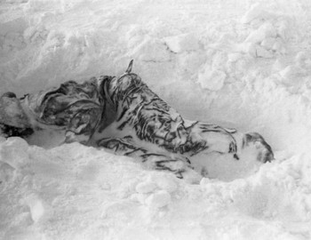 The body of Zina Kolmogorova was found by a rescue dog Alma (Альма) under 50 cm of snow.