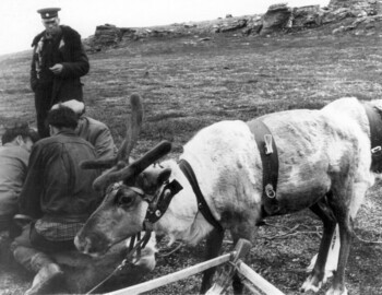 Vozrozhdenny (with the white hat) skilfully doing some manipulation over a reindeer, Captain Chernyshov standing up - photo archive Tolya Mohov